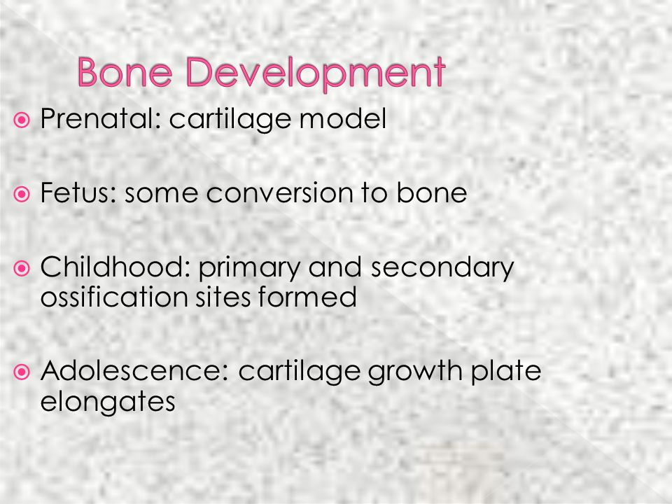 Bone Development Prenatal: cartilage model