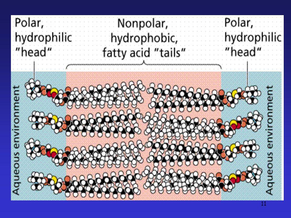 The Plasma Membrane 3/27/2017 G. Podgorski, Biol. 1010