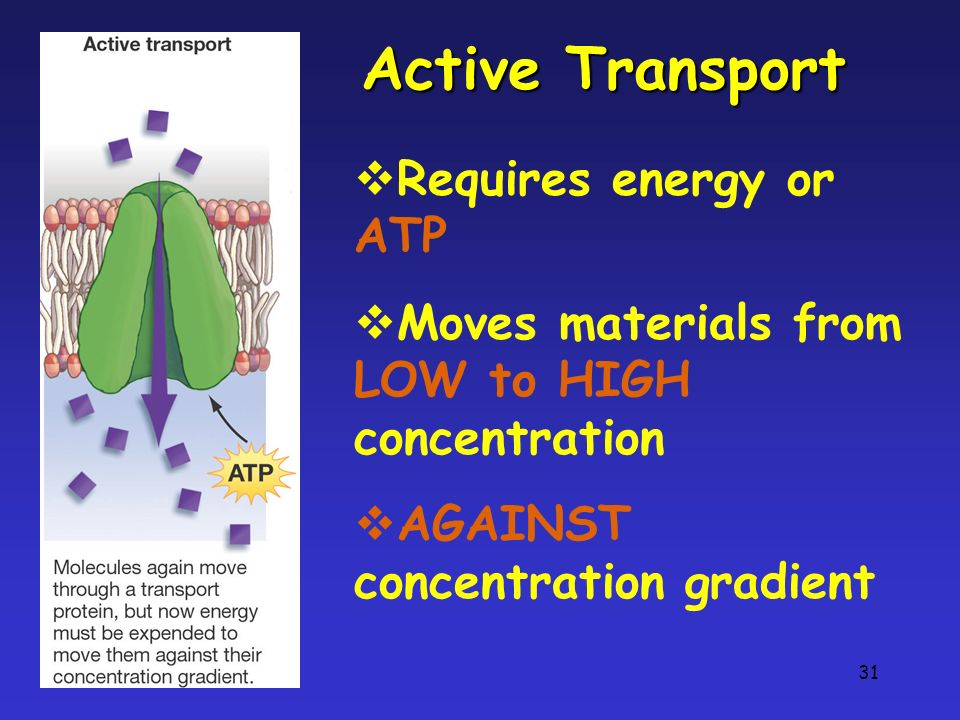 Active Transport Requires energy or ATP