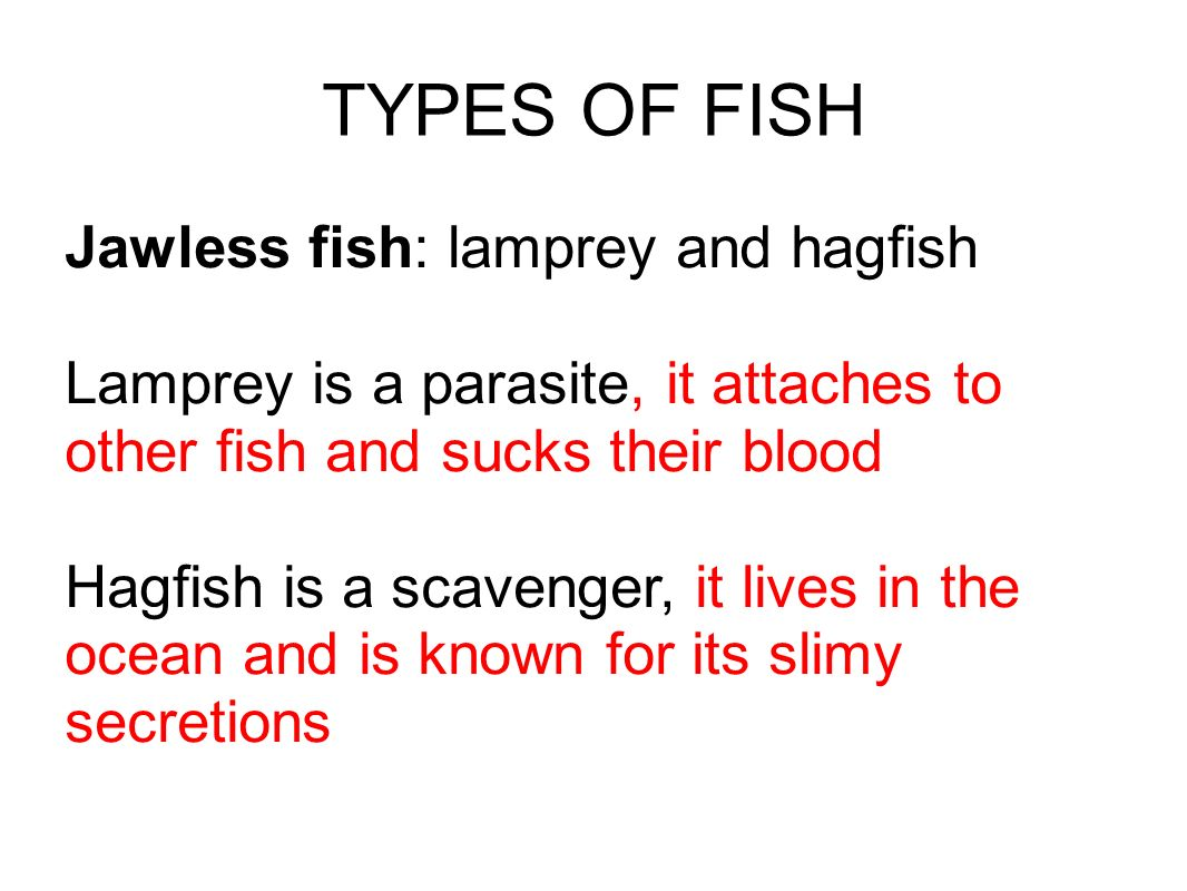 TYPES OF FISH Jawless fish: lamprey and hagfish