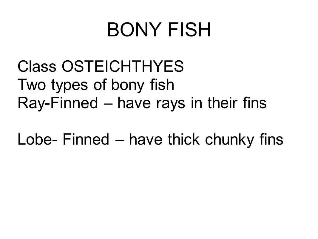 BONY FISH Class OSTEICHTHYES Two types of bony fish