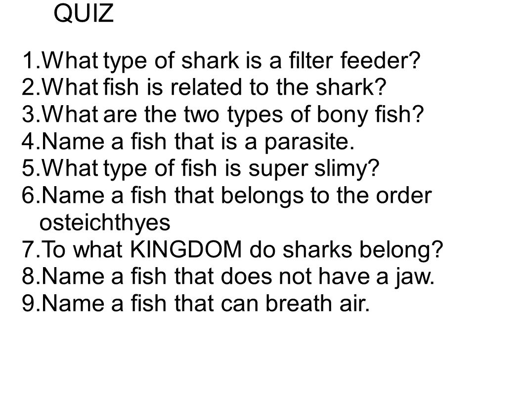 QUIZ What type of shark is a filter feeder