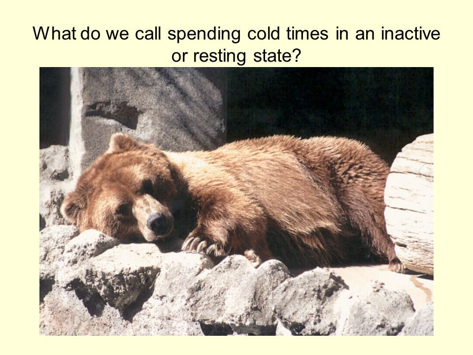 What do we call spending cold times in an inactive or resting state