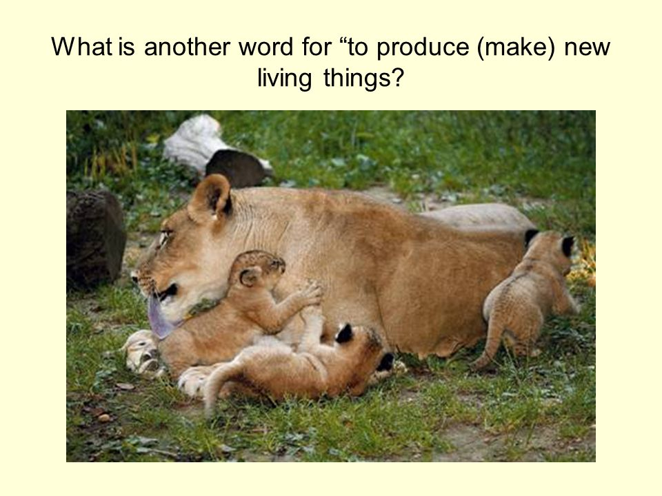 What is another word for to produce (make) new living things