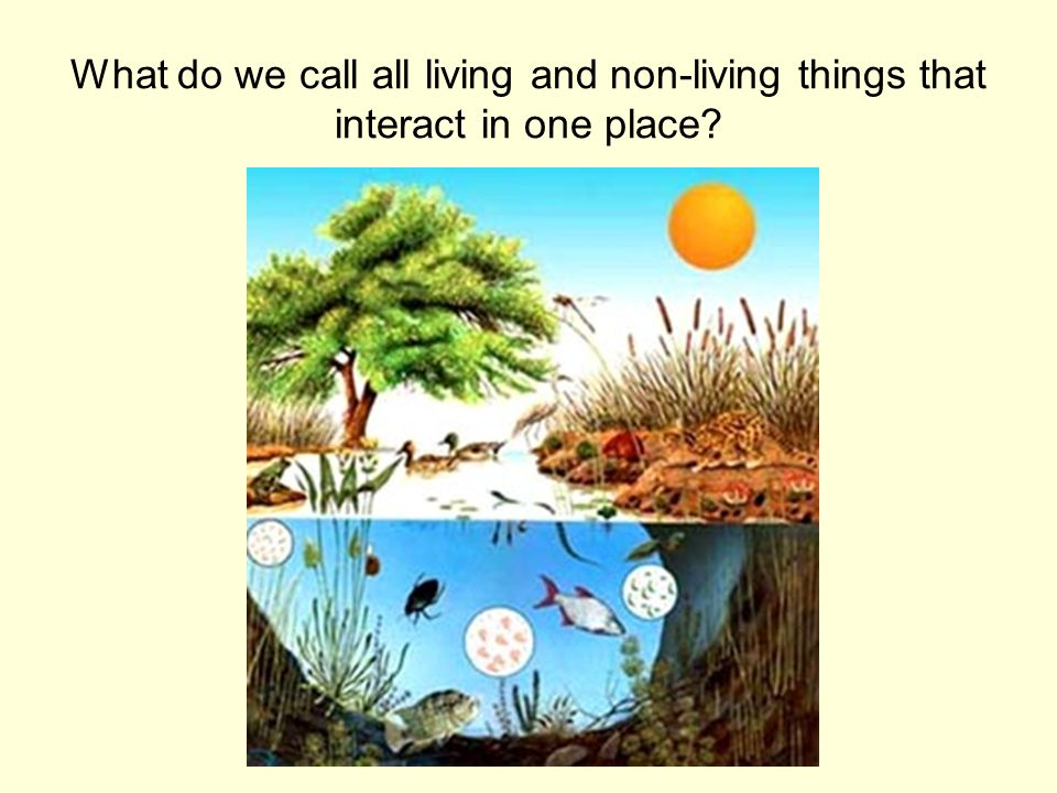 What do we call all living and non-living things that interact in one place