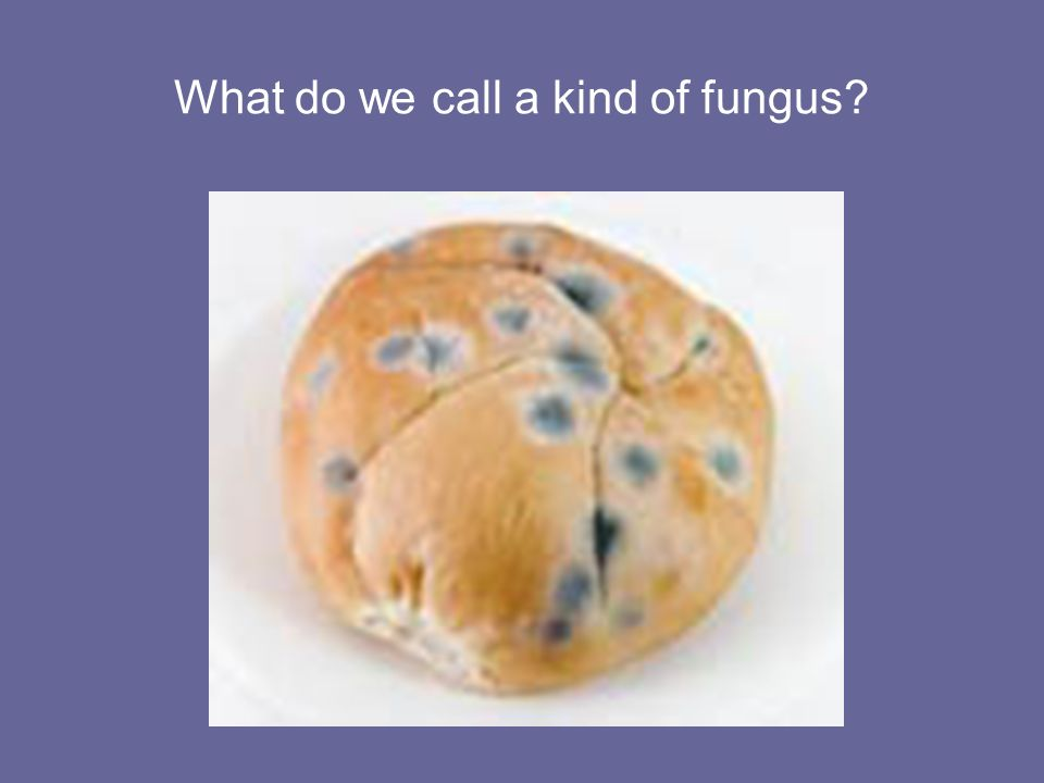 What do we call a kind of fungus