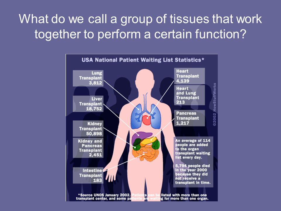 What do we call a group of tissues that work together to perform a certain function