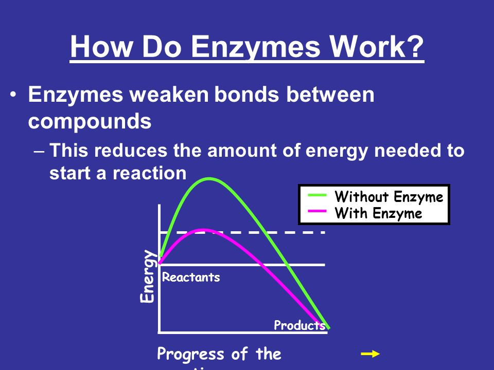 How Do Enzymes Work Enzymes weaken bonds between compounds