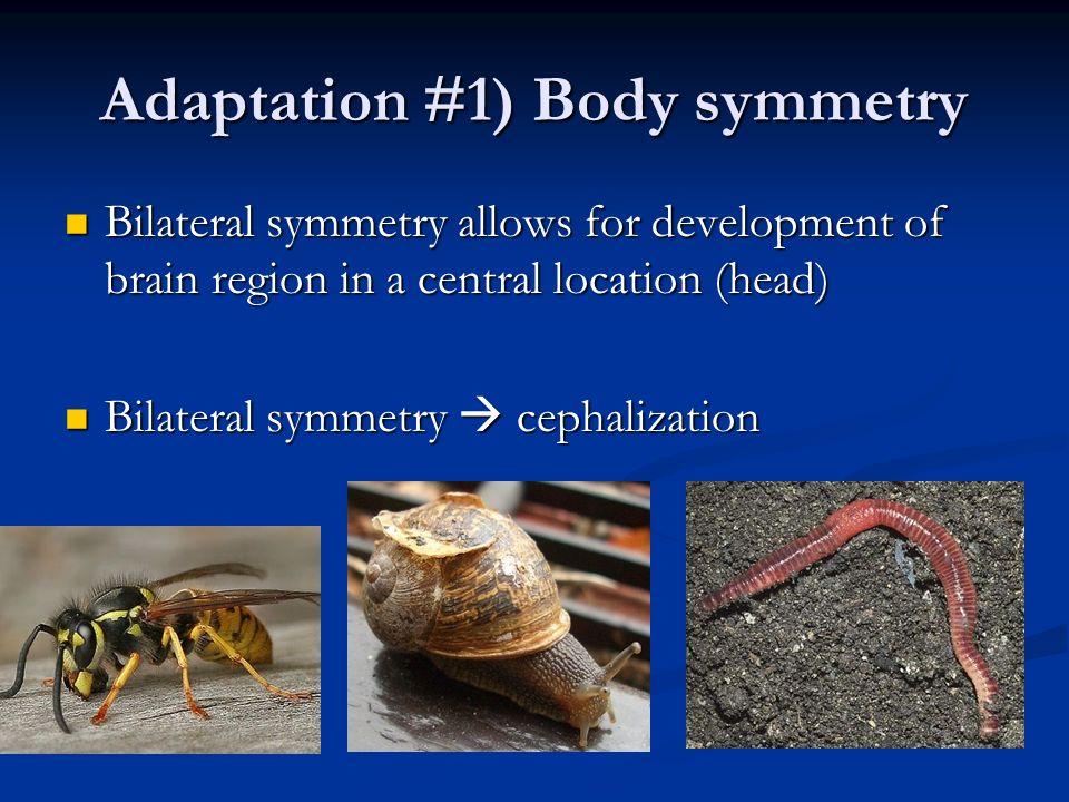 Adaptation #1) Body symmetry
