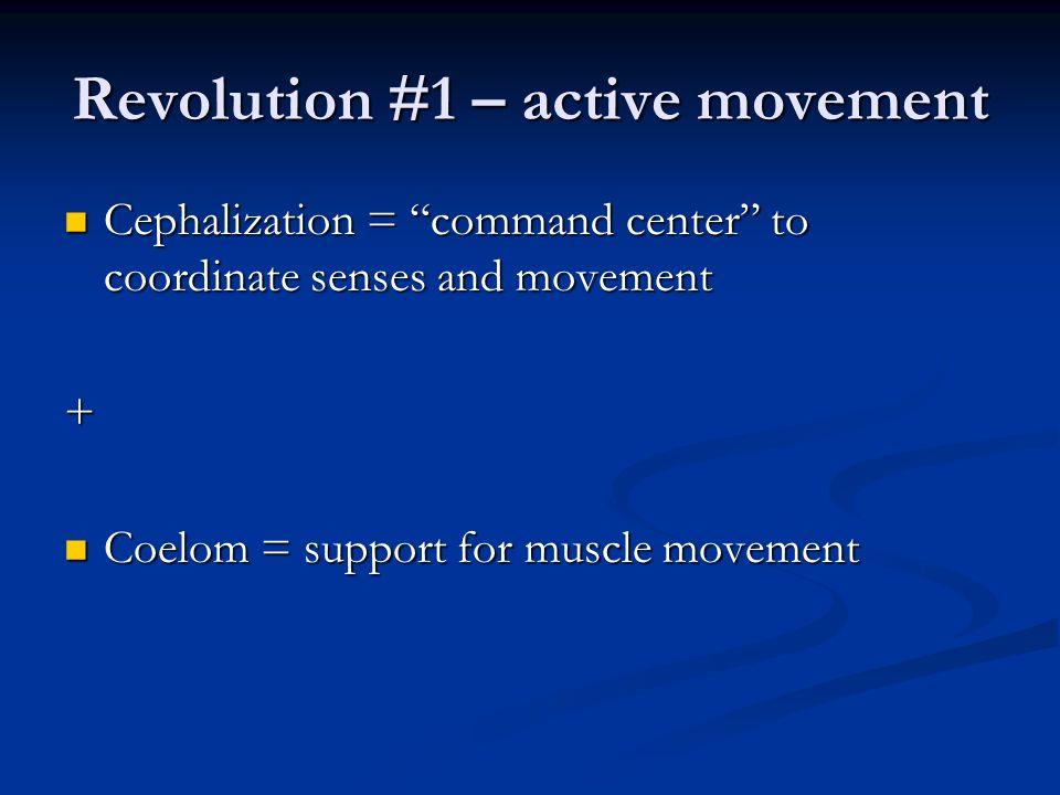 Revolution #1 – active movement