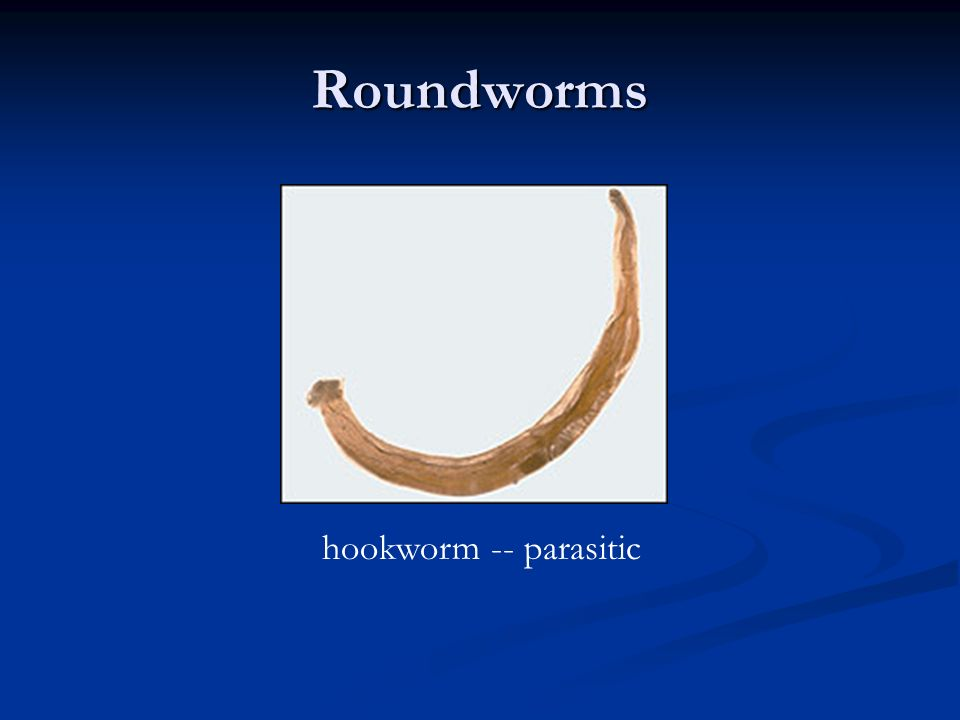 Roundworms hookworm -- parasitic