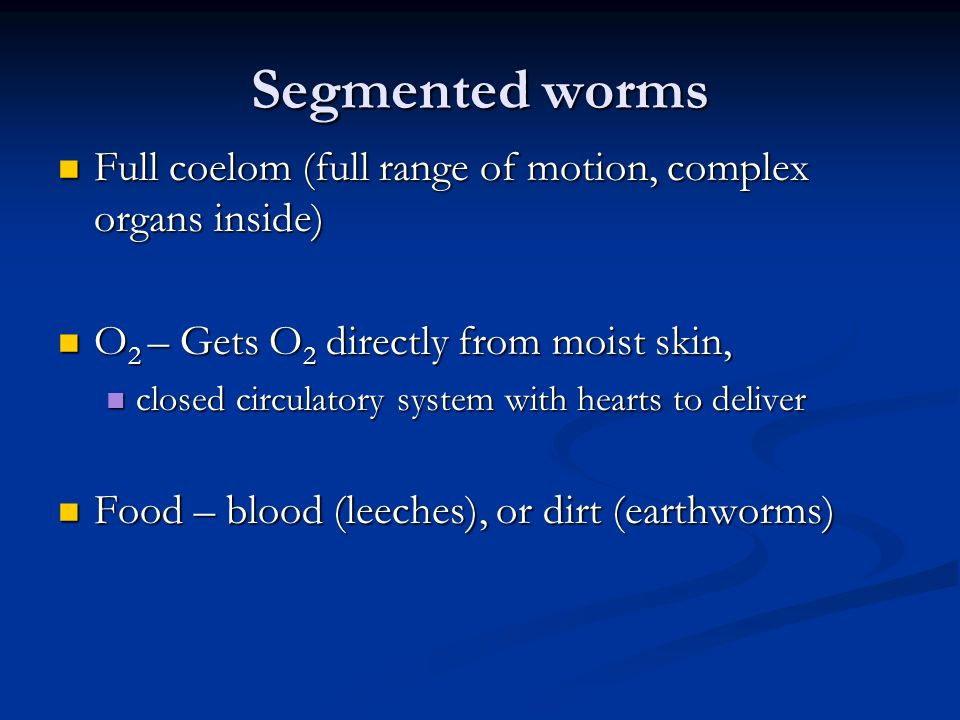 Segmented worms Full coelom (full range of motion, complex organs inside) O2 – Gets O2 directly from moist skin,
