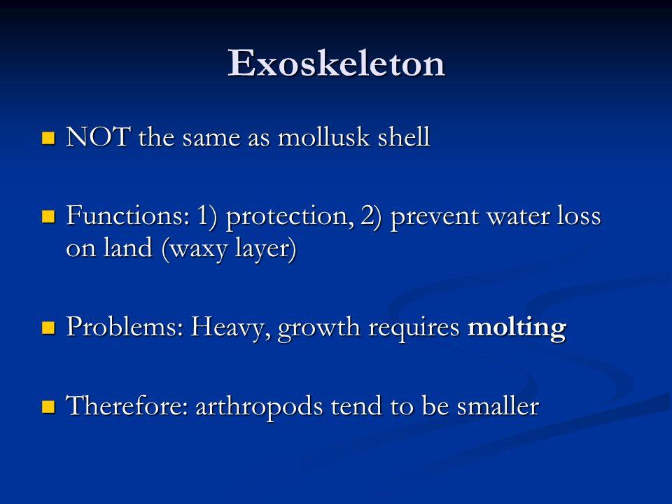 Exoskeleton NOT the same as mollusk shell
