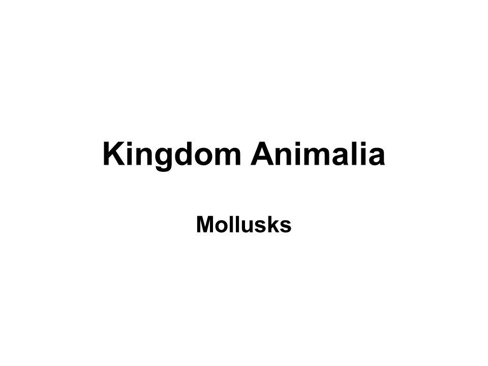 Kingdom Animalia Mollusks