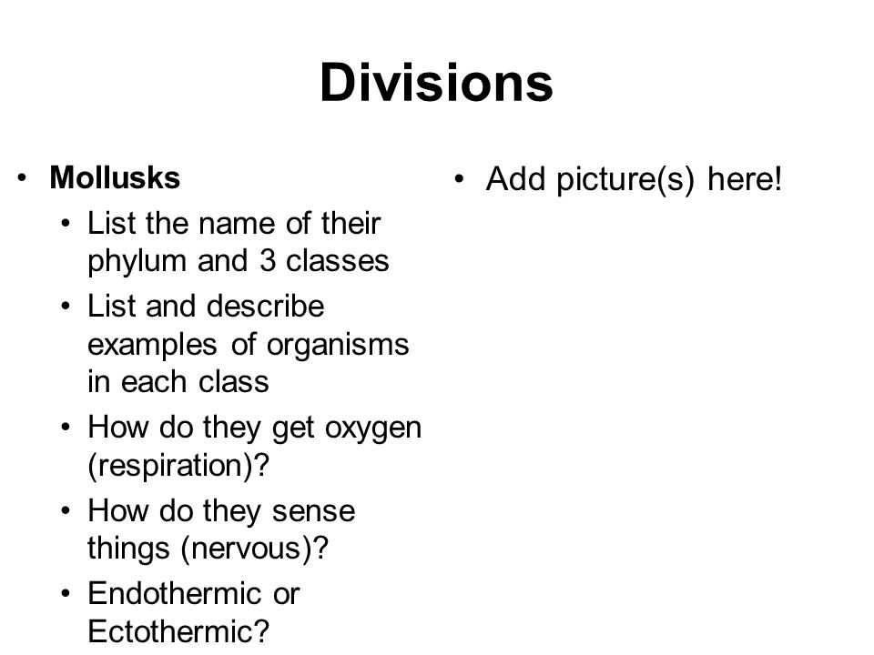Divisions Add picture(s) here! Mollusks