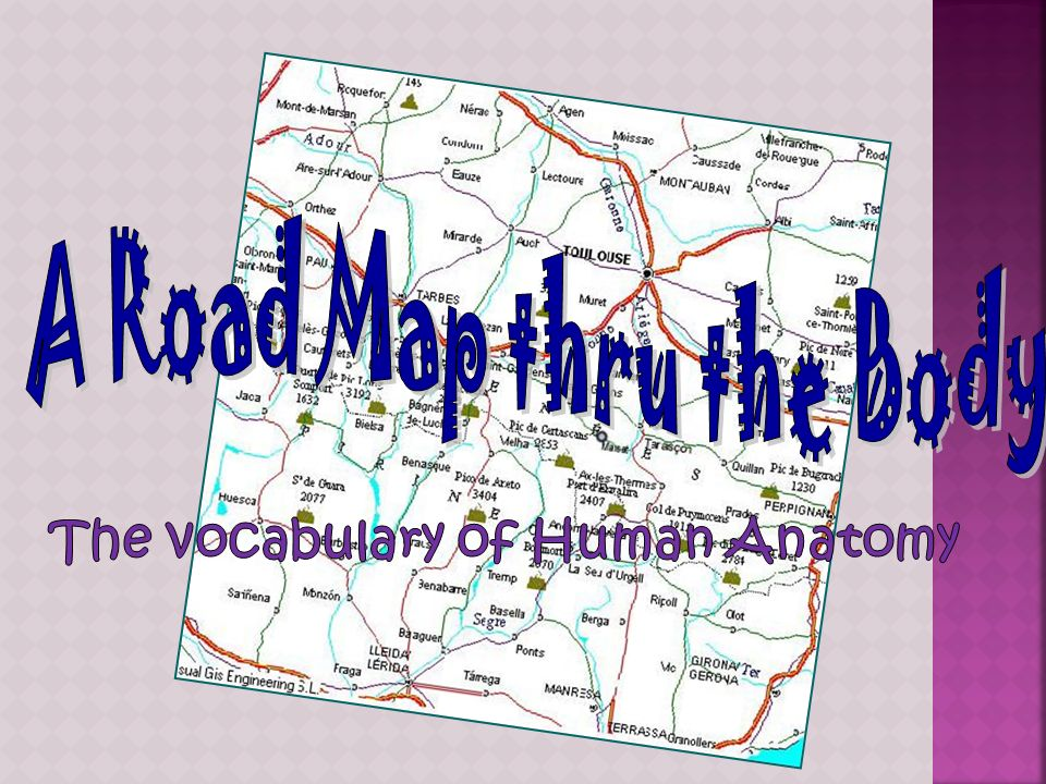 A Road Map thru the Body The vocabulary of Human Anatomy