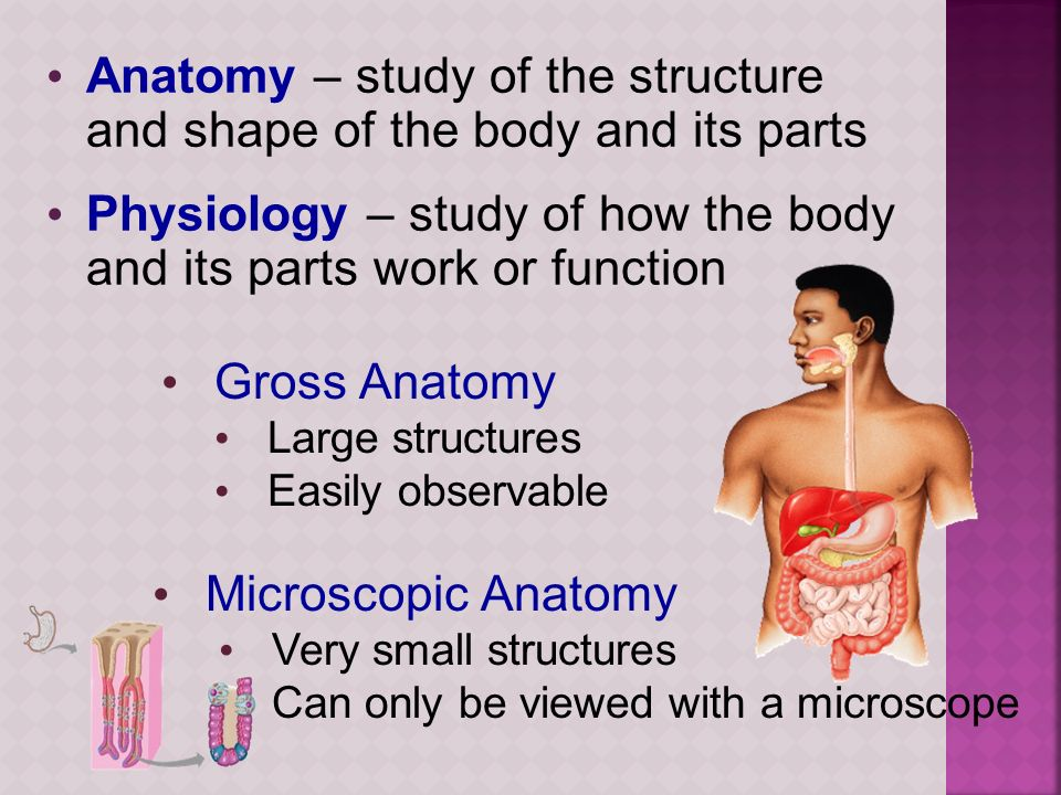 Anatomy – study of the structure and shape of the body and its parts