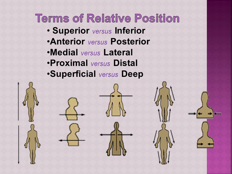 Terms of Relative Position