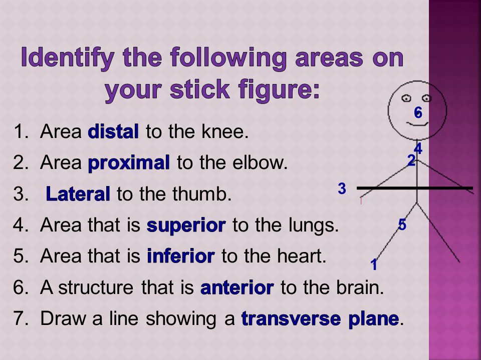 Identify the following areas on your stick figure: