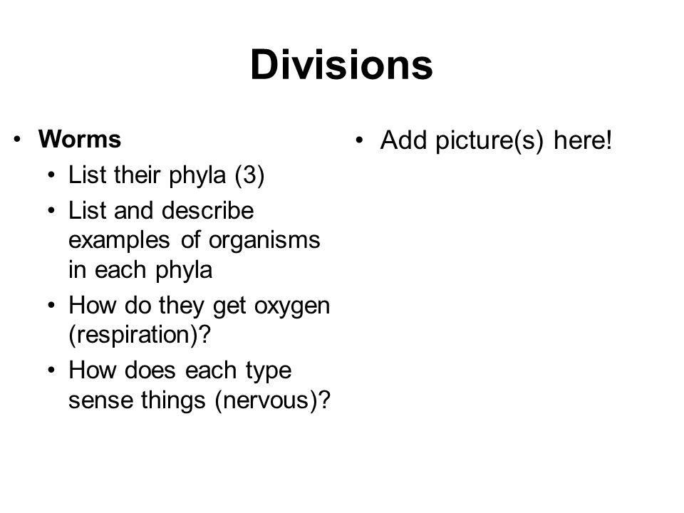 Divisions Add picture(s) here! Worms List their phyla (3)