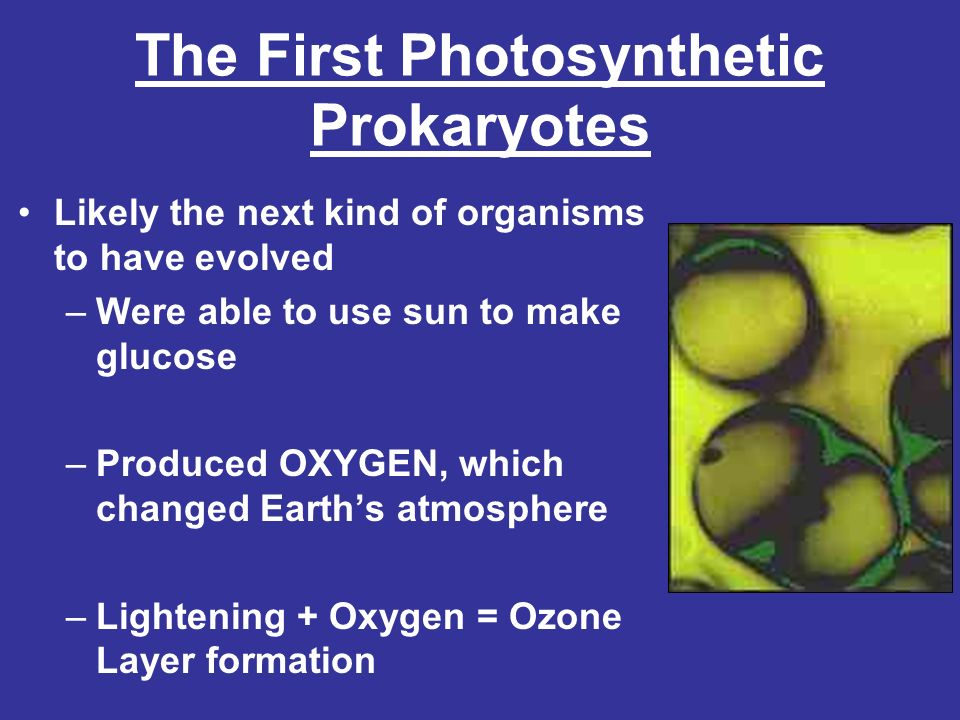 The First Photosynthetic Prokaryotes