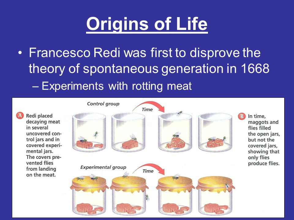 Origins of Life Francesco Redi was first to disprove the theory of spontaneous generation in 1668.