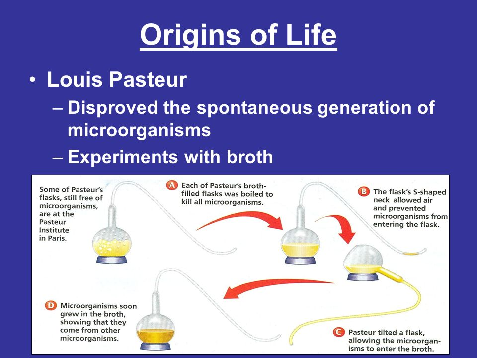 Origins of Life Louis Pasteur