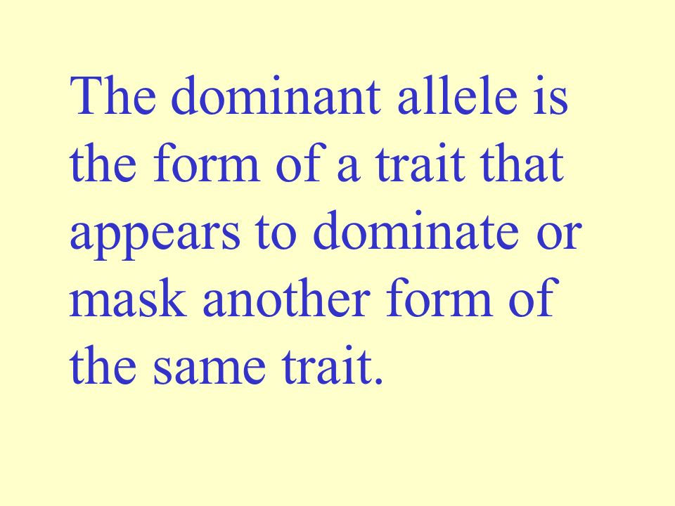 The dominant allele is the form of a trait that appears to dominate or mask another form of the same trait.