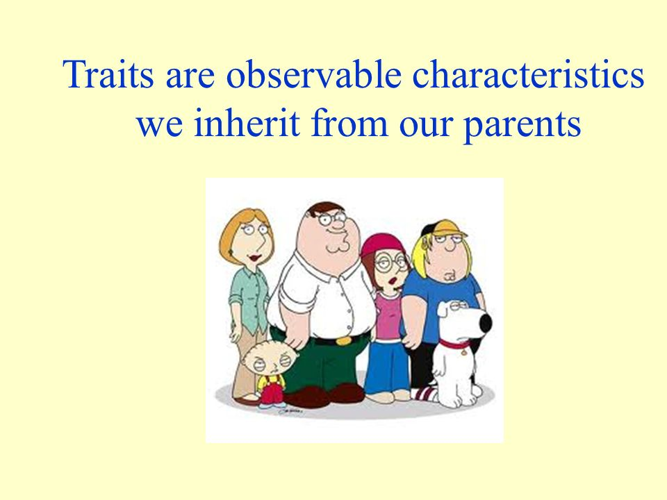 Traits are observable characteristics we inherit from our parents