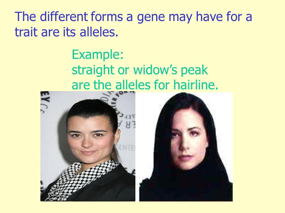 The different forms a gene may have for a trait are its alleles.