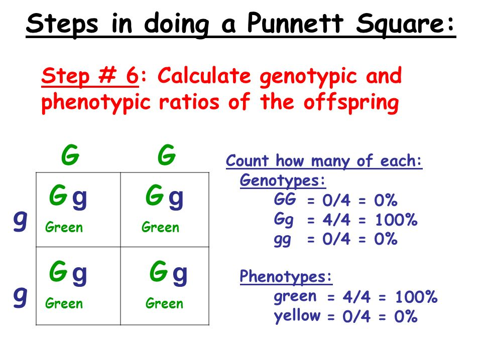 how to make genotypic ratio