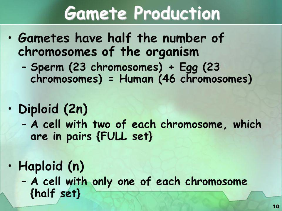 Gamete Production Gametes have half the number of chromosomes of the organism.