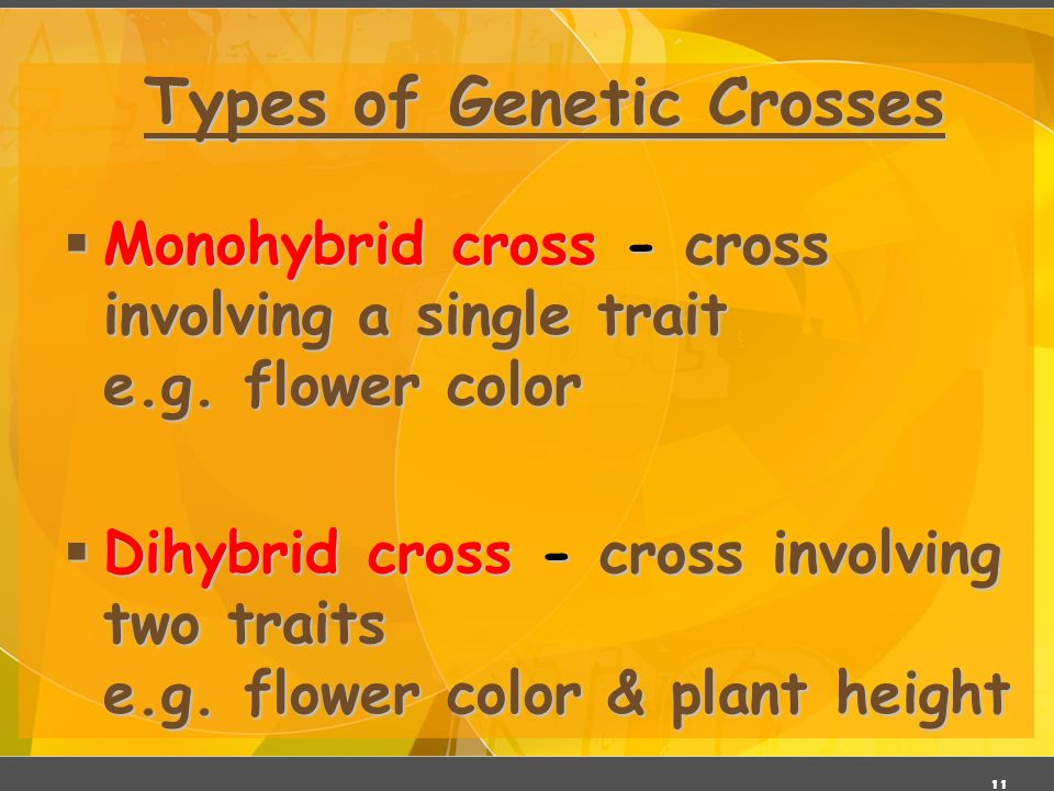 genetics cross A dihybrid cross is a breeding experiment between organisms that differ in two traits the parent organisms have different allele pairs for these traits.