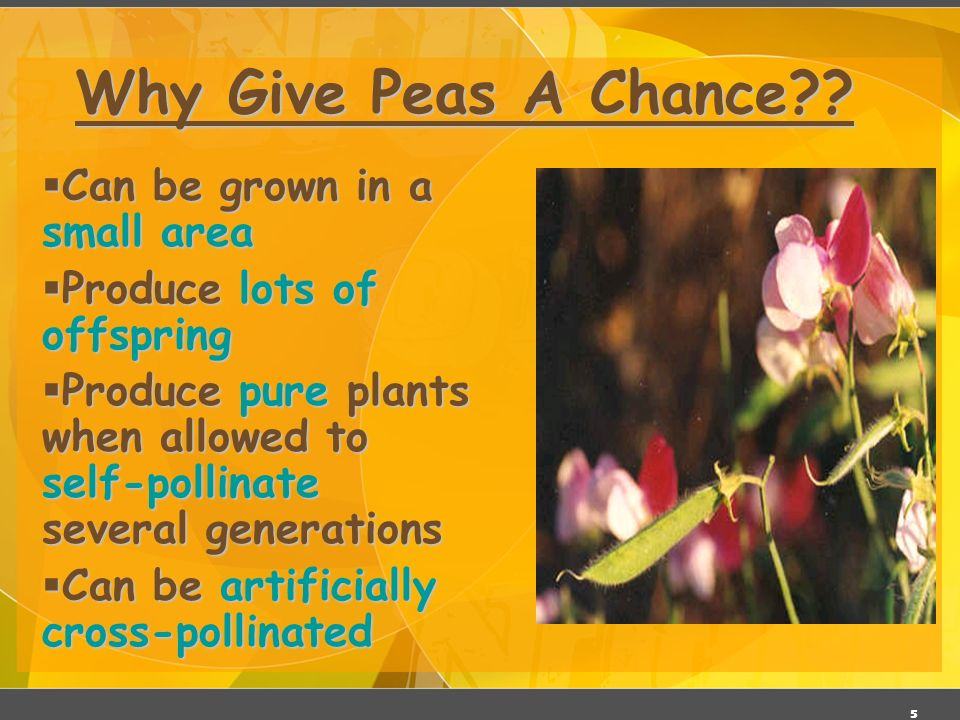 Why Give Peas A Chance Can be grown in a small area