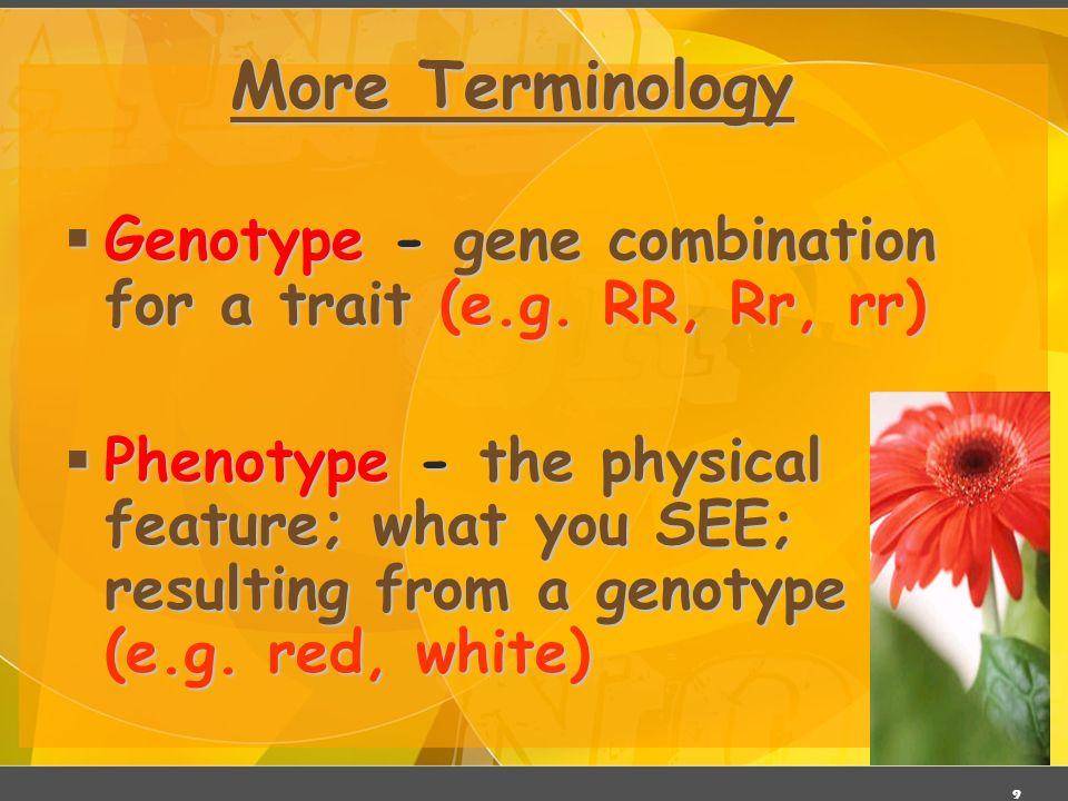 Mendelian Genetics 3/27/2017. More Terminology. Genotype - gene combination for a trait (e.g. RR, Rr, rr)