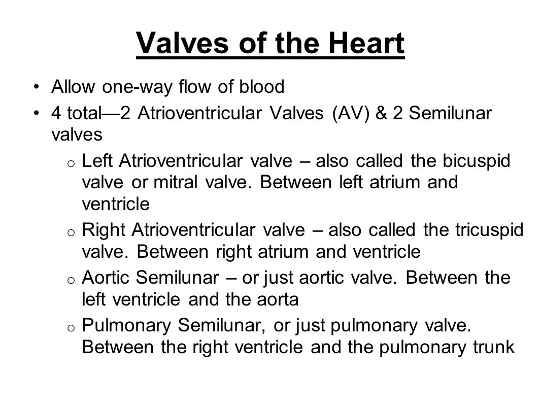Valves of the Heart Allow one-way flow of blood