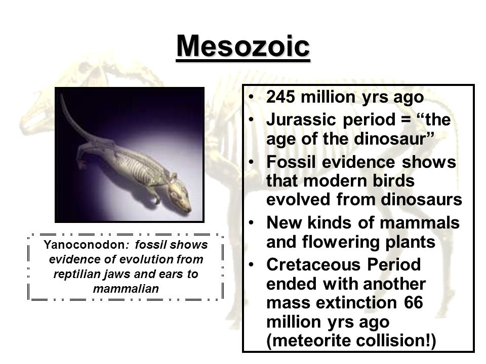 Mesozoic 245 million yrs ago