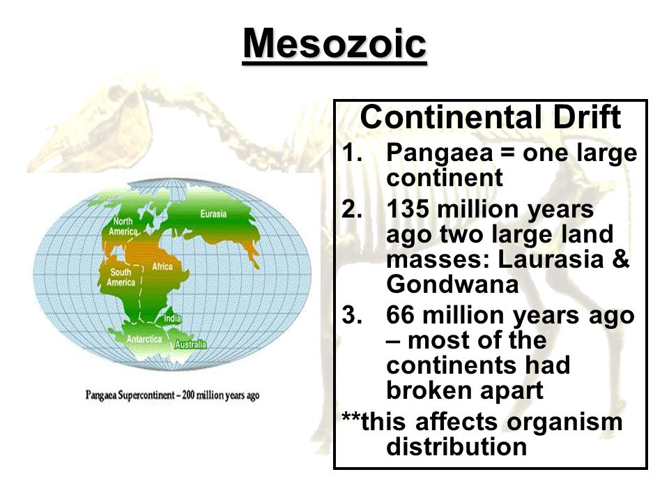 Mesozoic Continental Drift Pangaea = one large continent