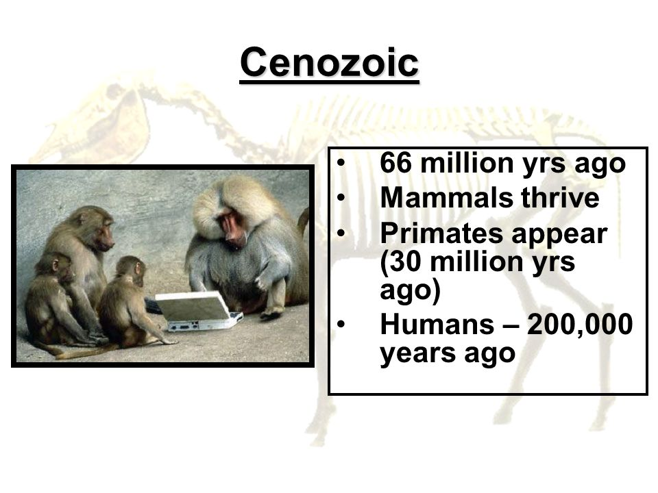 Cenozoic 66 million yrs ago Mammals thrive