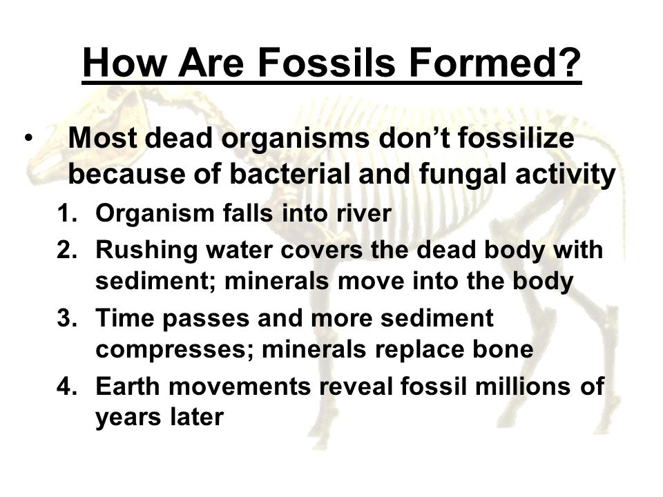 How Are Fossils Formed Most dead organisms don't fossilize because of bacterial and fungal activity.