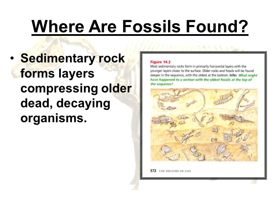 Where Are Fossils Found