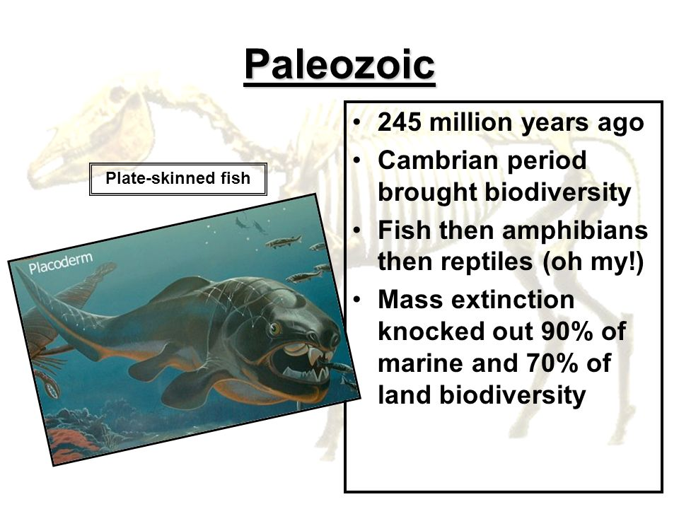 Paleozoic 245 million years ago Cambrian period brought biodiversity