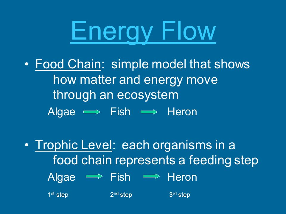 Energy Flow Food Chain: simple model that shows how matter and energy move through an ecosystem.