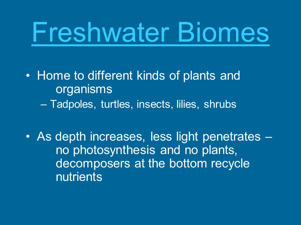 Freshwater Biomes Home to different kinds of plants and organisms