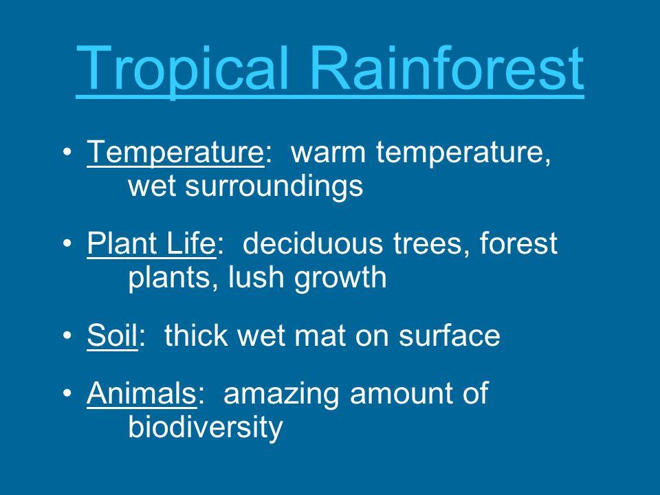 Tropical Rainforest Temperature: warm temperature, wet surroundings