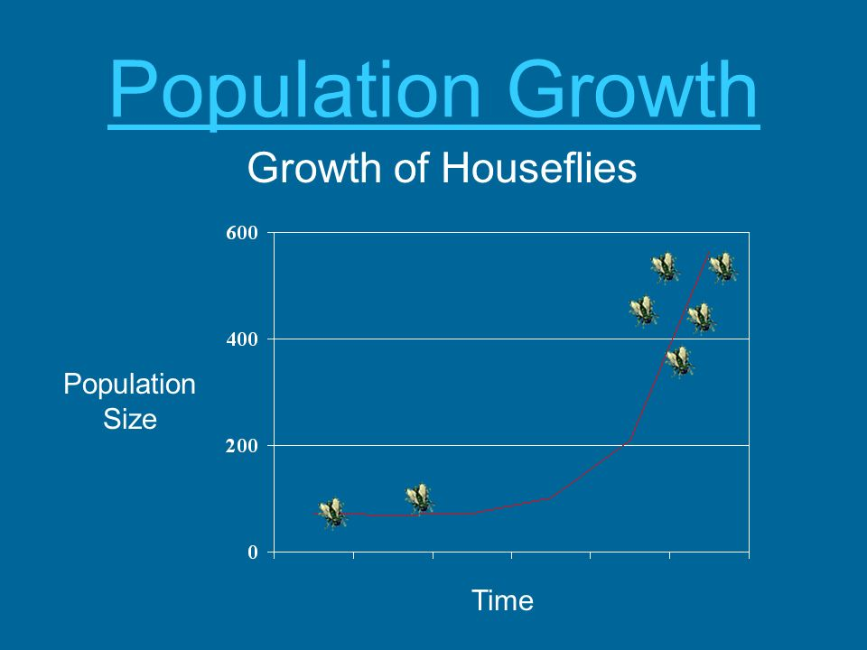 Population Growth Growth of Houseflies Population Size Time