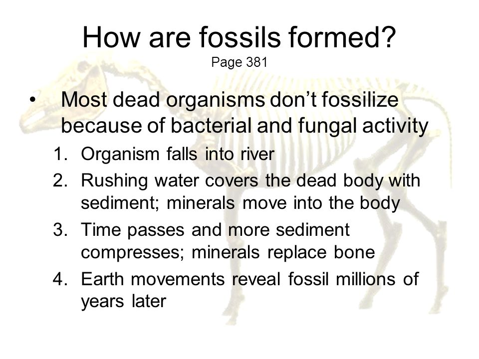 How are fossils formed Page 381