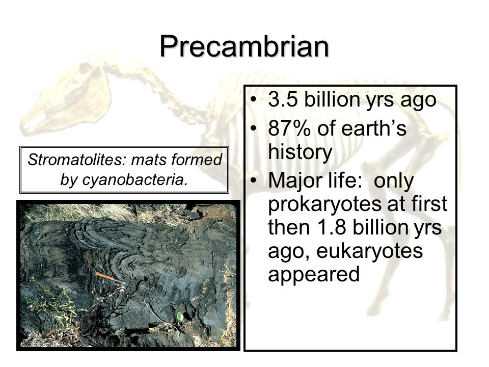 Stromatolites: mats formed by cyanobacteria.