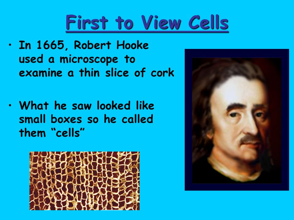 First to View Cells In 1665, Robert Hooke used a microscope to examine a thin slice of cork.