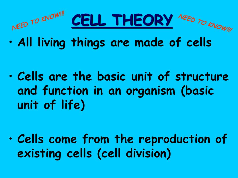 CELL THEORY All living things are made of cells